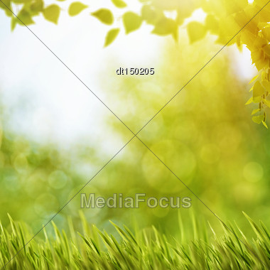 Abstract Natural Backgrounds With Summer Foliage And Bright Sunlight Stock Photo