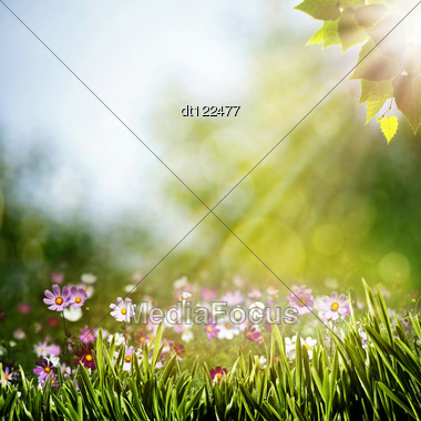 Abstract Natural Backgrounds With Beauty Flowers Stock Photo