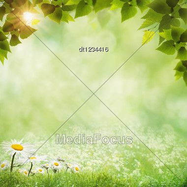 Abstract Natural Backgrounds With Daisy Flowers Stock Photo