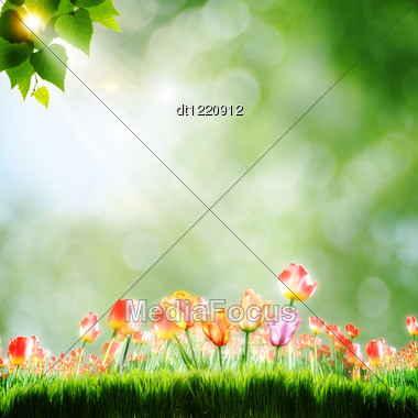 Abstract Natural Backgrounds With Tulip Flowers Stock Photo