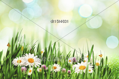 Abstract Natural Landscape With Beauty Daisy Flowers And Bokeh Stock Photo