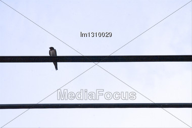 Abstract Pentagram And Musical Notes Whith Two Sparrow Stock Photo