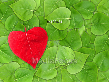 Abstract Valentine Background With Green Leaf Of Lilac And Red Heart Of Leaf-form For Your Design. Close-up. Studio Photography. Attention - It Is Not A Seamless Pattern. Stock Photo