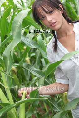 Agriculturist Stood In Corn Field Stock Photo