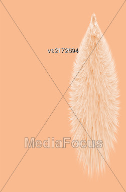 Animal Fluffy Fur Tail Isolated On Orange Background Stock Photo