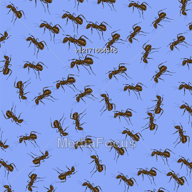 Animal Pattern. Ant Isolated On Blue Background Stock Photo