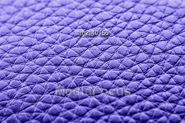 Animal Skin Texture Of The Close Up Stock Photo