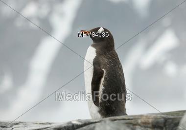 Antarctica Penquin Stock Photo