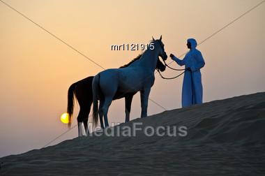Arabian Horse In The Arabian Desert Stock Photo