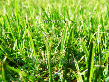 lawn nature grass Stock Photo