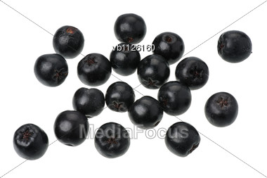 Aronia Berries Stock Photo