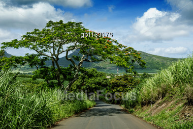 Ascending to les Mariannes from Long Mountain in the North of Mauritius Stock Photo