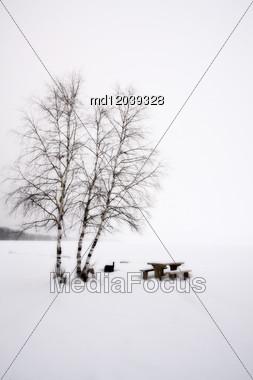 Aspen Trees Canada Saskatchewan Canada Winter Stock Photo