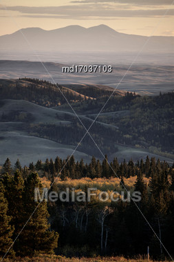 Autumn Colors Cypress Hills Canada Interprovincial Park Stock Photo