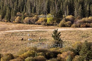Autumn Colors Cypress Hills Canada Interprovincial Park Horses Stock Photo