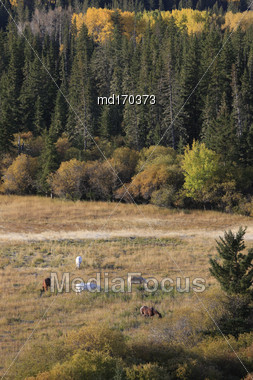 Autumn Colors Cypress Hills Canada Interprovincial Park Horses Stock Photo