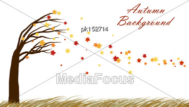 Autumn Design From Tilting Maple Tree With Blowing Away Leaves On White Background. Elegant Design With Copy Space And Ideal Balanced Colors. Vector Illustration Stock Photo