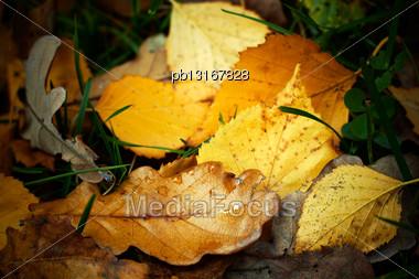 Autumn Fallen Leaves With Rain Drops, Closeup Shot Stock Photo