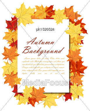 Autumn Frame With Blank Sheet Of Paper And Maple Leaves Over And Under It. Over White Background. Elegant Design With Text Space And Ideal Balanced Colors. Vector Illustration Stock Photo