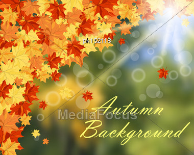 Autumn Frame With Maple Leaves And Sun Beams Stock Photo