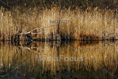 Autumn Lake And Marsh Moor Marshy Abstract In The North Of Italy Stock Photo