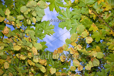 autumn leaves floating in the sky Stock Photo