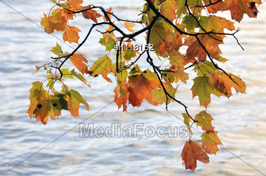 Autumn. Maple Leaves On A Wind Against Water Stock Photo