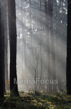 Autumn Mist In Forest. October Frosty Morning Stock Photo