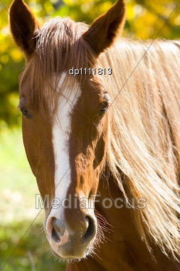 Autumn, Portrait Of A Horse On A Background Of Yellow Leaves Stock Photo