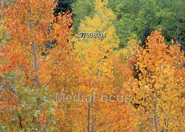 Autumn Trees Background Stock Photo