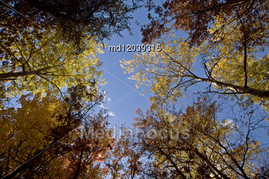 Autumn Trees Fall Michigan Colors Beautiful Red Orange Stock Photo
