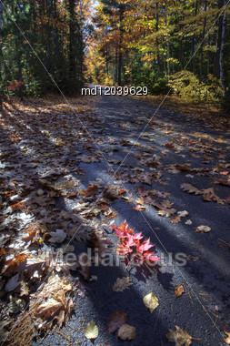 Autumn Trees Fall Michigan Colors Beautiful Red Orange Stock Photo