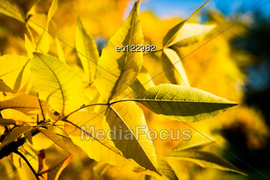 Autumn Yellow Tree With Blue Sky Stock Photo