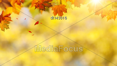 Autumnal Banner With Falling Leaves For Your Design Stock Photo