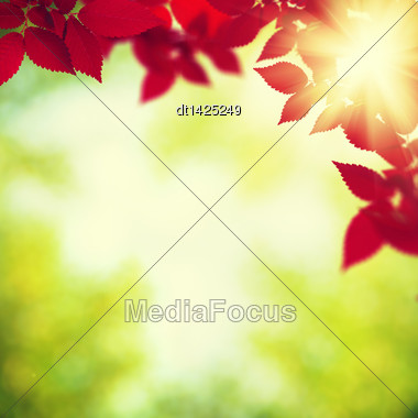 Autumnal Foliage Over Green Blurred Backgrounds Stock Photo