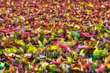 Background Of A Layer Of Beautiful Autumn Leaves In HDR High Dynamic Range Stock Photo
