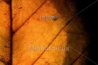 Background Macro Close Up Abstract Of A Yellow Red Leaf And His Veins In The Light Stock Photo