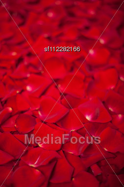 Background Of Beautiful Red Rose Petals Stock Photo