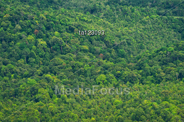 Background Of The Vibrant Rainforest Trees Stock Photo