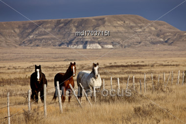 Badlands Canada Saskatchewan Big Muddy Horses In Pasture Stock Photo