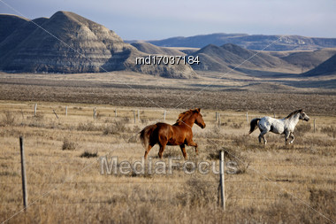 Badlands Canada Saskatchewan Big Muddy Horses In Pasture Stock Photo