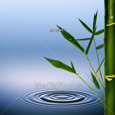 Bamboo. Abstract Environmental Backgrounds Stock Photo