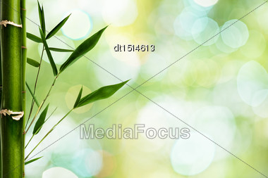 Bamboo Grfass Against Green Backgrounds With Beauty Bokeh Stock Photo