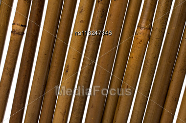 Bamboo Stems Background Close Up Stock Photo