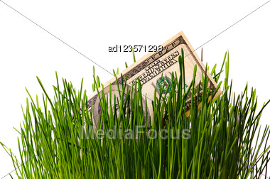 Banknote Dollar In Green Grass Stock Photo