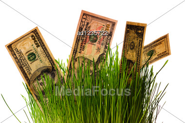 Banknotes Dollars In Green Grass Stock Photo
