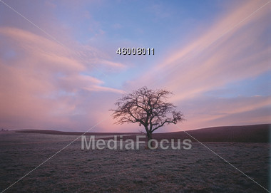 Bare Tree After Sunset Stock Photo