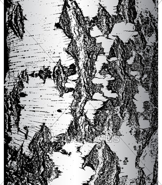 Bark Of Birch In The Cracks Texture. Vector Illustration Stock Photo
