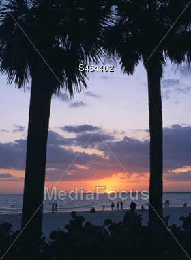 Beach Sunset with Palm Trees Stock Photo
