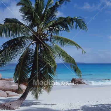 Beach with Palm Tree - Praslin, Seychelles Stock Photo